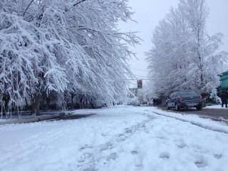 暖かかったから、すっかり樹氷になってキレイ^^