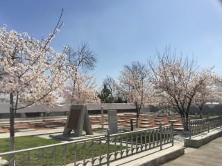 タシケント、ヤッカサライの日本人墓地